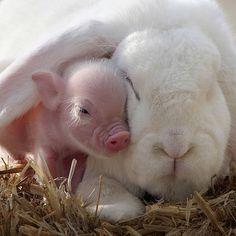 Happy life of pet pigs - Xinhua | English.news.cn