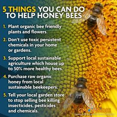 By Doing These Things We Can Help Bees To Stop Disappearing And Making The World A Better Place