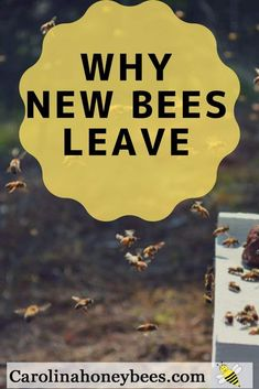 Why do honey bees leave the hive? The reason for absconding. When new beekeeper go out to find an empty hive it is very upsetting. Learn what you can do to increase the chances of keeping your bees at home. Package Bees, Bee Hive Plans, Beekeeping For Beginners, Raising Bees, Raising Ducks, Bee Swarm, Bee Boxes, Backyard Beekeeping, Backyard Chickens