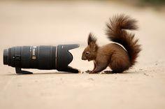 afraid of third-party by Felix Dobritoiu - Animals Other Mammals ( sigma, funny, wildlife, lens, squirrel, animal )