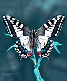 """tinnacriss: """"… Papilio machaon … by """" Butterfly Drawing, Butterfly Photos, Butterfly Painting, Butterfly Kisses, Butterfly Wallpaper, Butterfly Wings, Butterfly Images Photography, Most Beautiful Butterfly, Beautiful Bugs"""