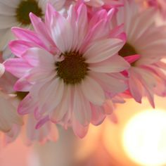 Beat the winter blues with flowers and candlelight!  @Looksi Square  @Mary Beth @ Cupcakes & Crinoline