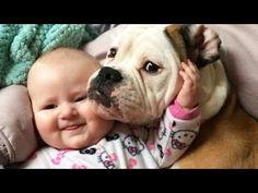 Canción dedicada para los amantes de los perritos | Cuidar de tu perro es facilisimo.com