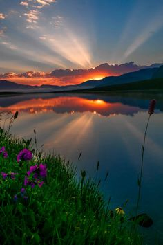 ponderation: Flowers and Sunset by Turan Reis