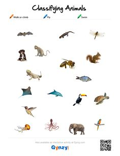 Teaching with help of the interactive whiteboard in a simple and effective way Classifying Animals, Interactive Activities, Biology, Keys, Goodies, Walking, Pdf, Swimming, English