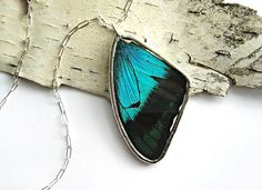 Shifting Aqua Blue Butterfly Wing Necklace real wing by PoPkO