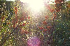 Strand, Plants, Blog, Photography, Photograph, Fotografie, Blogging, Photoshoot, Plant