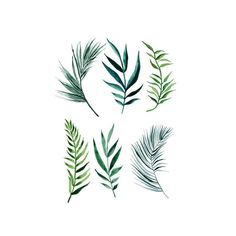 Tattoo Removal - Image result for palm leaf tattoo - Quick and Easy Natural Methods & Secrets to Eliminating the Unwanted Tattoo That You've Been Regretting for a Long Time #tattooremovalfacts