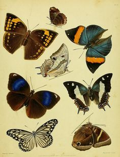 n176_w1150 by BioDivLibrary, via Flickr