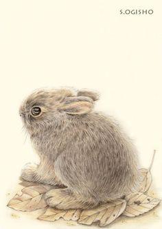 ウサ君 Rabbit, Owl, Creatures, Bird, Animals, Animales, Animaux, Rabbits, Owls