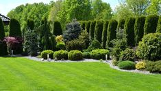 Evergreen Landscape, Large Backyard Landscaping, European Garden, Garden Yard Ideas, Garden Landscape Design, Landscape Lighting, Garden Inspiration, Beautiful Gardens, Gardening