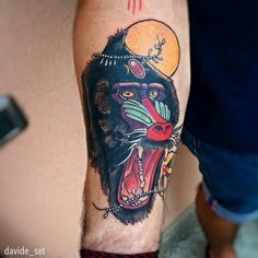 Mandrill by Davide Set from Italy
