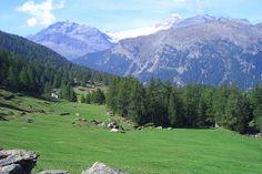 Val di Campo  Die Wanderung führte uns durch Wälder und über saftige Alpwiesen. Die Kulisse war ein Traum...