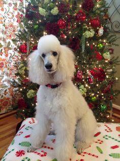 Lily at Christmas