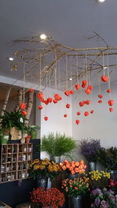 The Fresh Flower Company , London Hanging physalis. The Fresh Flower Company , London Halloween Witch Decorations, Halloween Hats, Halloween Trees, Halloween Porch, Christmas Decorations, Decoracion Habitacion Ideas, Ideas Decoracion Cumpleaños, Decorating Coffee Tables, Porch Decorating