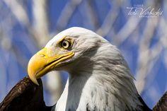 Let Freedom Ring! by Teri Virbickis, via Flickr