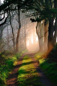 ,,,to take a walk through forest paths, when light sieves through them!