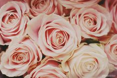 Roses on my wedding day (by April BrightBax)