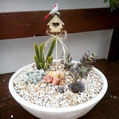 Mini Jardim com Cactos e suculentas. Meus... Pinterest ...