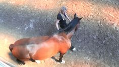 The first step in#groundwork is to make the horse bend equally to the left and to the right.