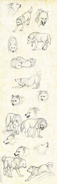 sketches_wolfs by Anisis