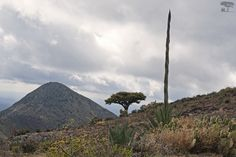 Mittie Roger - Real de Catorce and Hiking the Huicholes' Sacred Mountain Wirikuta.