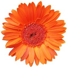 Orange is often called the social color, as it creates the feng shui energy to promote lively conversations and good times in your home. Learning Sites, Teaching Methods, Feng Shui Energy, Feng Shui Colours, Log Fires, Feng Shui Tips, Peace And Harmony, Gerbera, School Fun