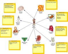 Pregnancy, Birth, Babies, Parenting | Human body systems, Body ...