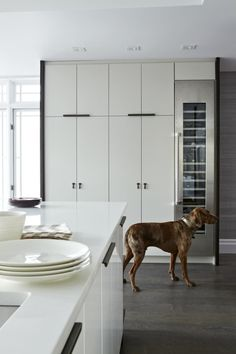 Modern White Kitchen - modern - kitchen - toronto - Croma Design Inc like wine fridge Ikea Cabinets, Modern Kitchen Cabinets, Kitchen Flooring, Kitchen Interior, Kitchen Design, Kitchen Modern, Kitchen Ideas, White Cabinets, Tall Cabinets