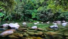 The ancient mossy river boulders of Mossman Gorge, Daintree rainforest. Trinity Beach, Daintree Rainforest, Cairns Australia, Great Barrier Reef, Adventure Awaits, Countries Of The World, The Good Place, Natural Beauty, Nature Photography