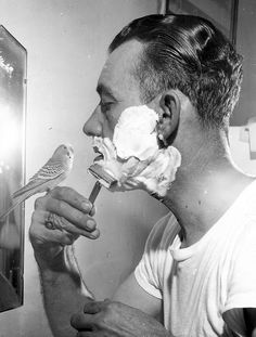 Shaving...the Budgie making sure it's done right  :)