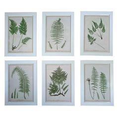 Set of Six Prints of Ferns by Henry Bradbury