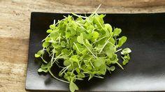 Nedávno ju odborníci označili za najzdravšiu zeleninu na svete, pritom sa na ňu takmer zabudlo. Táto bylinka má viac železa ako špenát a oveľa viac vitamínu C ako citrusy!