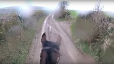 Man instantly regrets taking retired racehorse for gentle countryside trot