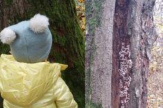 Die Allacher Lohe — Natur für Klein und Groß