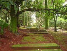 Fazenda Conde do Pinhal em São Carlos.  http://sergiozeiger.tumblr.com/post/100534703238/fazenda-conde-do-pinhal-em-sao-carlos-antonio  Pomar - caminho das jabuticabeiras