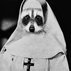 VK is the largest European social network with more than 100 million active users. Raccoon Art, Racoon, Funny Quotes, Pictures, Animals, Nun, People, Faces, Internet