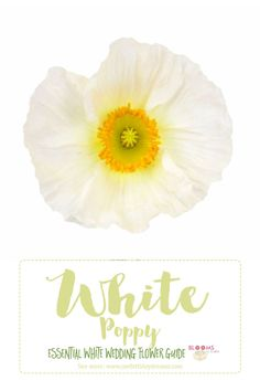 Save this awesome, in-depth White Wedding Flowers Guide for Types of White Flowers, White Flowers Names and Pictures, plus Season + Style Info!