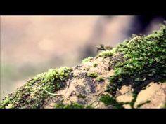 Boozoo Bajou Featuring Tony Joe White / Keep Going - YouTube