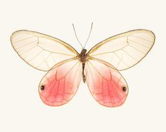 Pink Butterfly Photo Insect Art Butterfly от RockyTopPrintShop