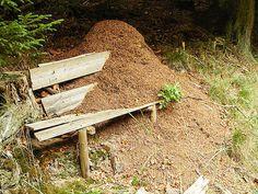 Passeggiando nel #bosco si possono incontrare cose meravigliose: la forza della #natura. Un #formicaio ha riconquistato una #panca integrandola perfettamente nel mega #condominio delle #formiche di #montagna. Eccezionale vero?! #TrentinoNatura, #TrentinoWow!