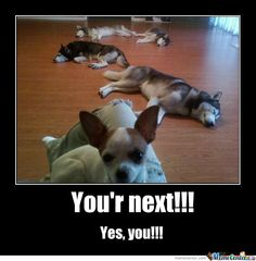 You're Next!!  #humor   #lol  #funnypuppies  Most funny puppies  http://buymelaughs.com/