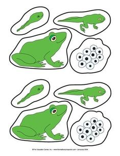 amphibian life cycle Frog Life Cycle, Log, and Lily Pads, Lesson Plans - The Mailbox Frogs Preschool, Preschool Science Activities, Science For Kids, Sequencing Activities, Preschool Education, Elementary Science Experiments, Science Notes, Science Biology, Science Fair