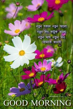 Good Morning Happy, Good Morning Images, Wonder Boys, Morning Messages, Beautiful, Gud Morning Images, Good Morning Picture