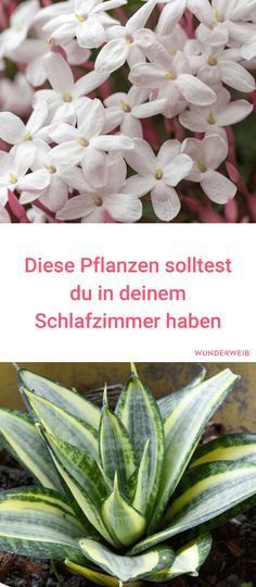 In England gibt es sogar Blumen auf der Toilette,also wieso nicht i… Interesting. There are even flowers in the toilet in England, so why not in the bedroom ? Garden Plants, Indoor Plants, Planting Plants, Dulux Valentine, Diy 2019, Bedroom Plants, Bedroom Flowers, Begonia, Diy Garden Decor