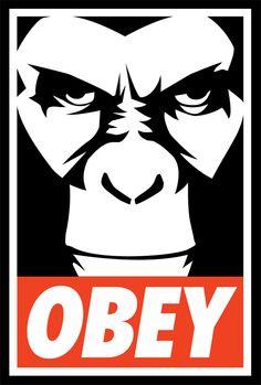 obey donkey