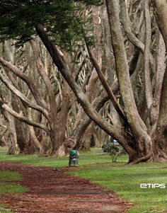 Lovely Tree Hill in Auckland, New Zealand ♥ by eTips