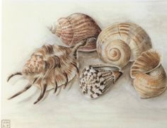 A personal favourite from my Etsy shop https://www.etsy.com/uk/listing/474599305/shell-study-greetings-card-shells