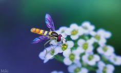 In the garden of Miki Asai, there are so many beautiful things (IX) l #macro