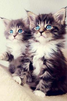 Cute kittens WoW!